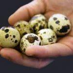 Tratamentul cu ouă de prepeliţă