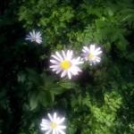 Discernământul – cheia linistii sufletești