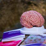 Hranește-ti creierul